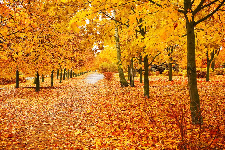 Buntes Laub an den Bäumen im Herbst
