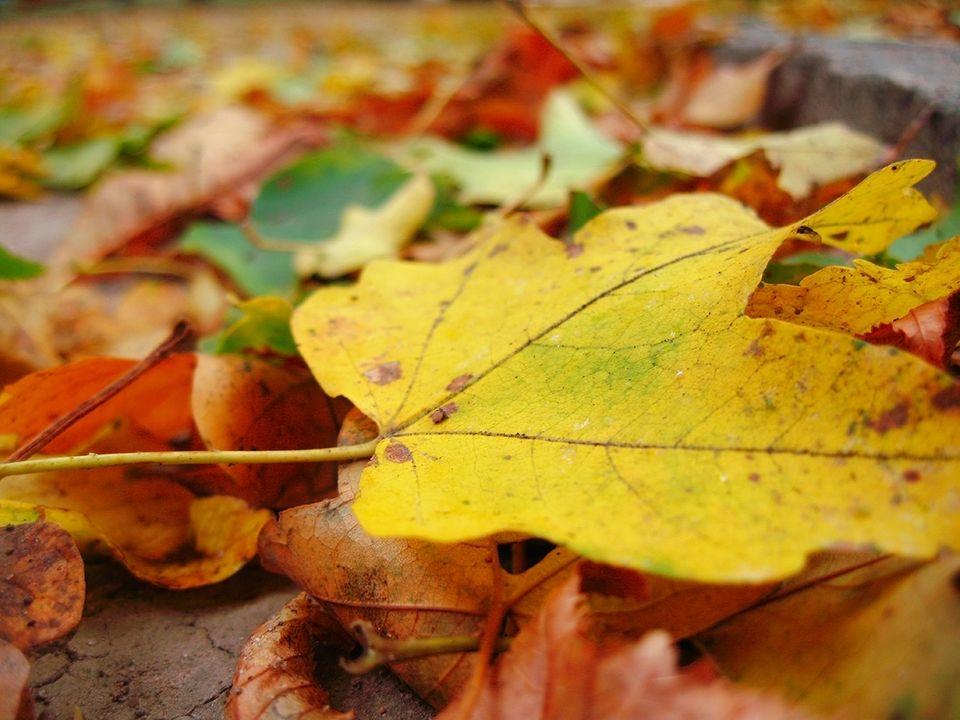 Buntes Herbstlaub