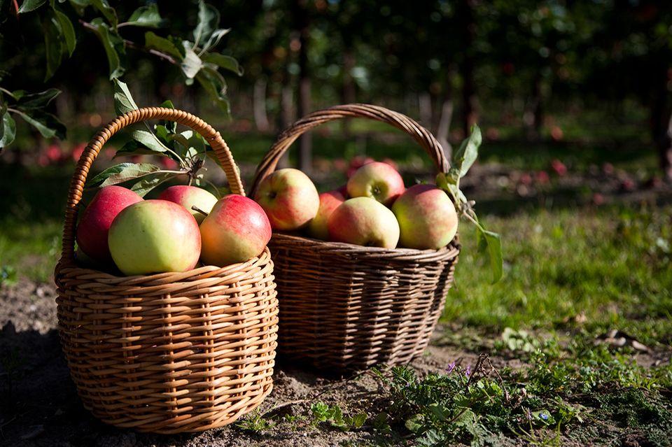 Äpfel in Körben