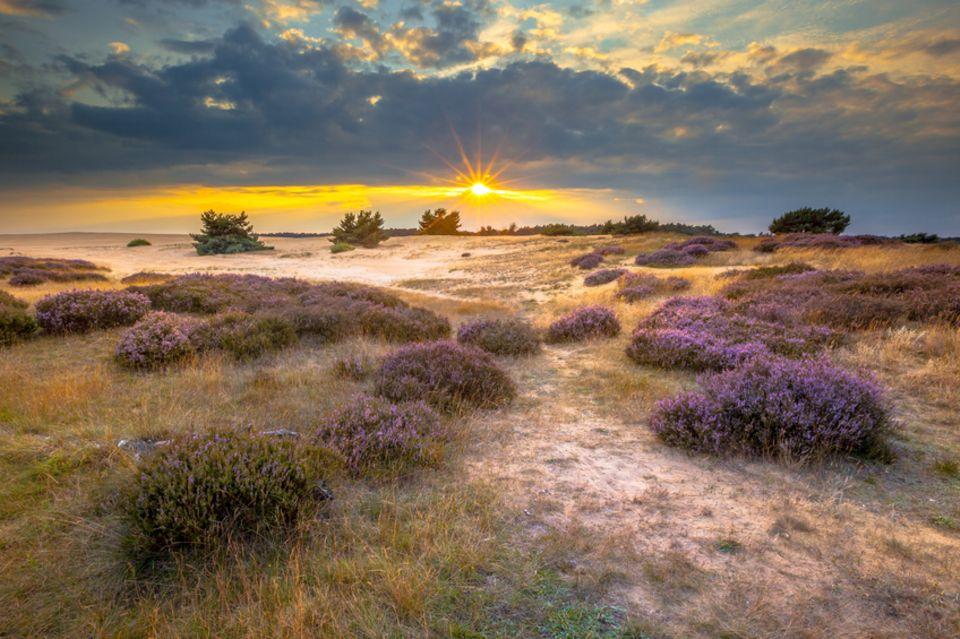 Hoge Veluwe National Park, Holland