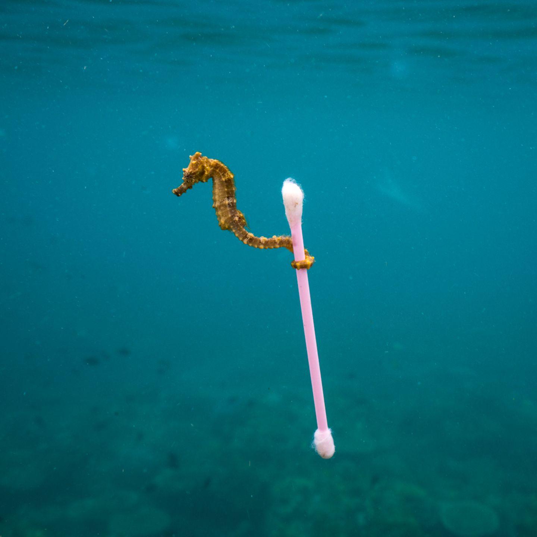 Justin Hofman, Finalist Wildlife Photographer of the Year, Sewage surfer