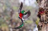 Tyohar Kastiel, Finalist Wildlife Photographer of the Year.