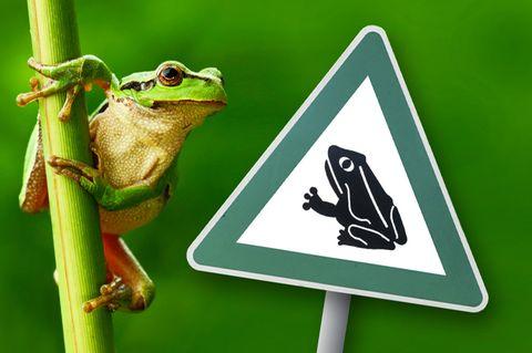 Frosch Tierschutz