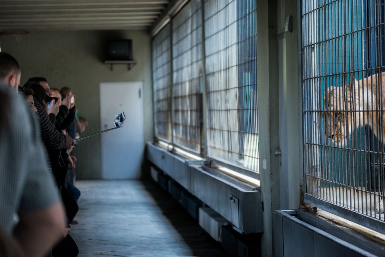 Jo-Anne McArthur, Captive