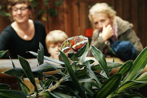 Tropenaquarium Hagenbeck