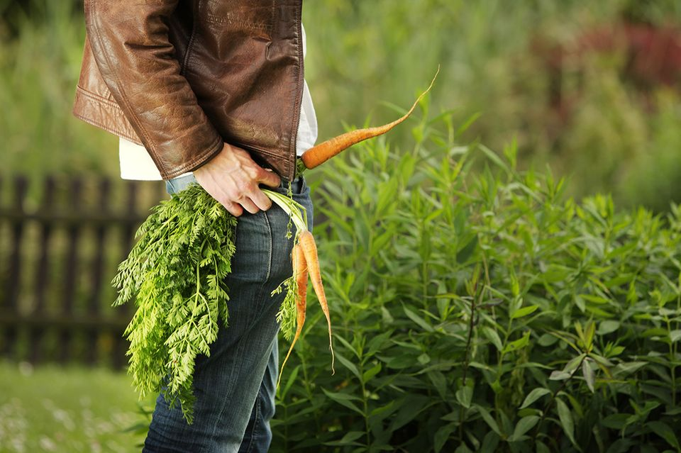 Mann mit Karotten