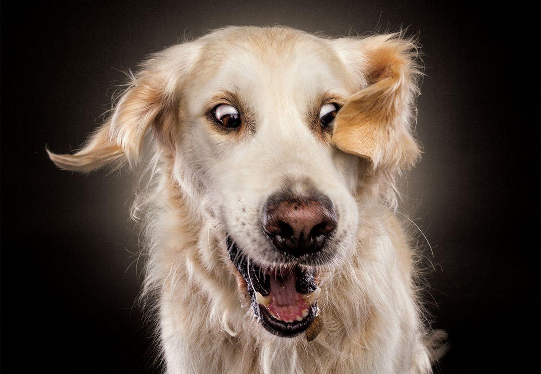 Hunde Schnappschüsse von Christian Vieler