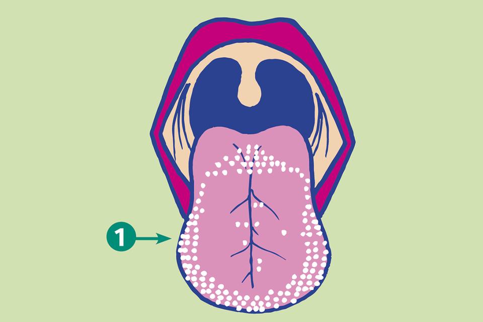 Schmecken Zunge Sinne