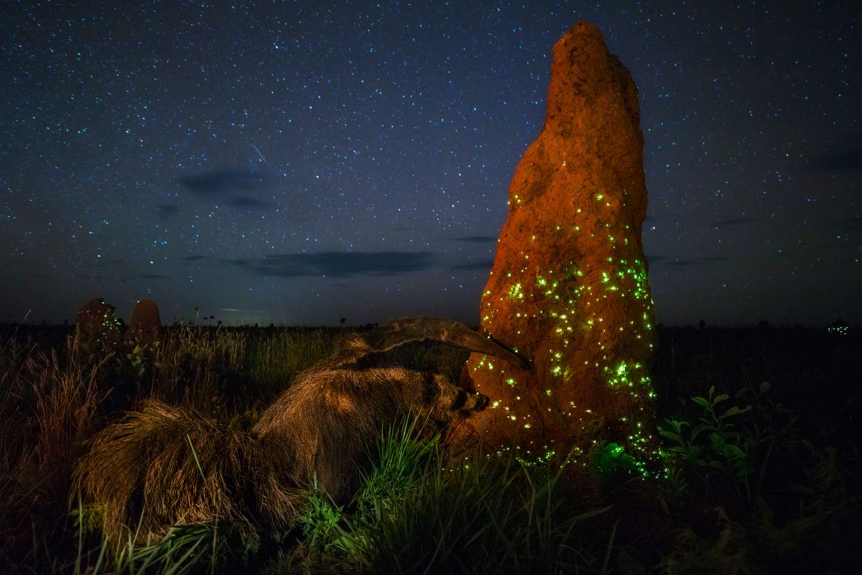 Marcio Cabral, Wildlife Photographer of the Year
