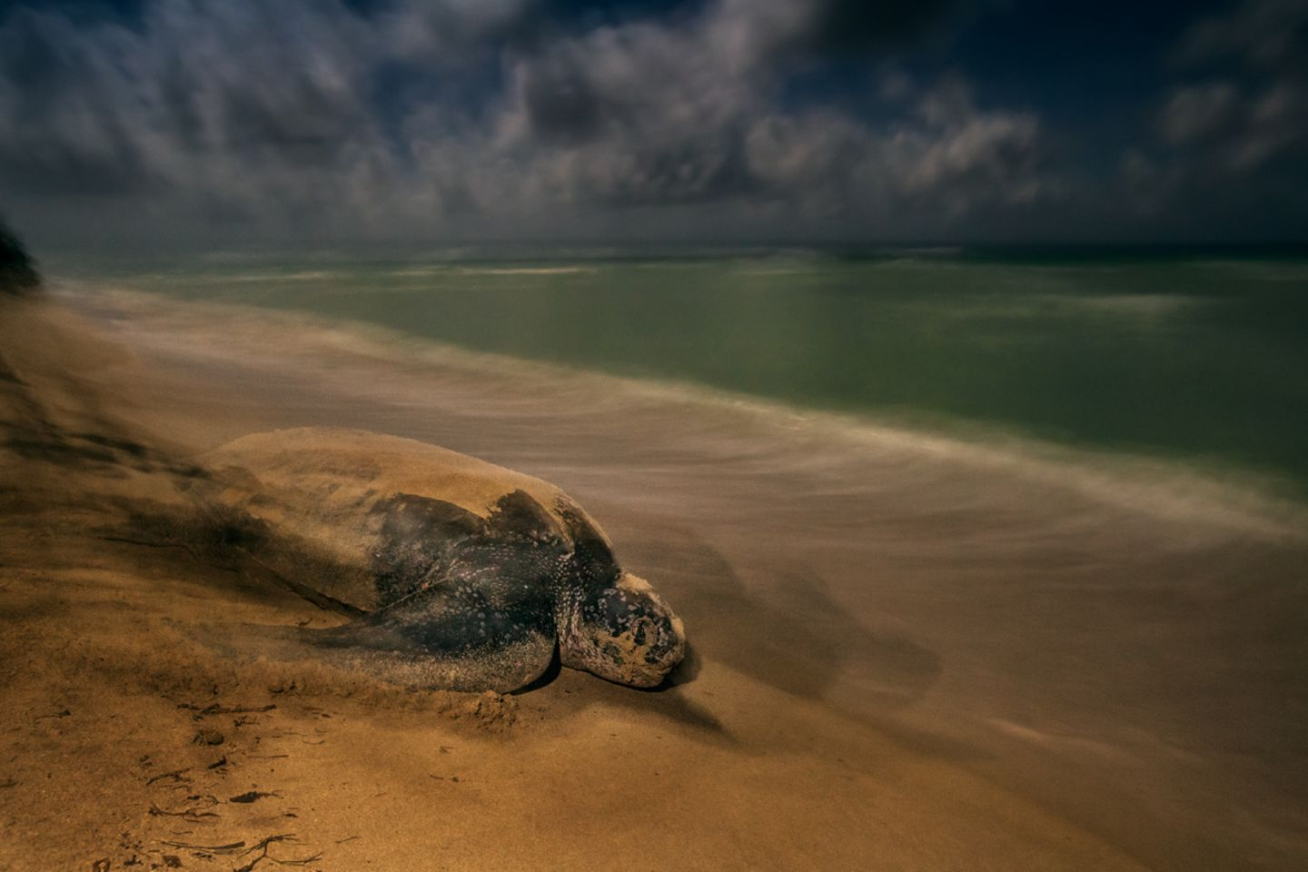 Brian Skerry, Wildlife Photographer of the Year