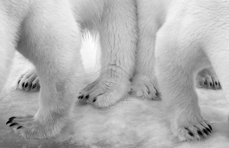 Eilo Elvinger, Wildlife Photographer of the Year