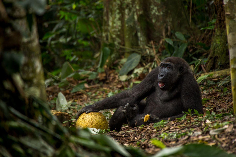 Daniel Nelson, Wildlife Photographer of the Year