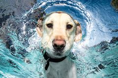 Hund unter Wasser, Casteel