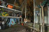 Fuchs im Gartenhaus