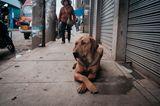 Straßenhund in Peru