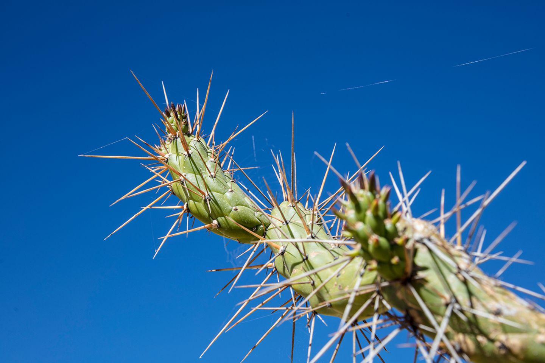 Kaktus in Peru