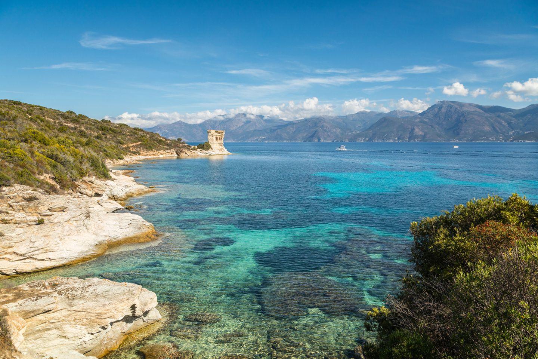 Mortella auf Korsika