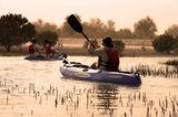 Kajaktour in den Mangroven Lagunen