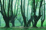 Waldwelten - Kilian Schönberger