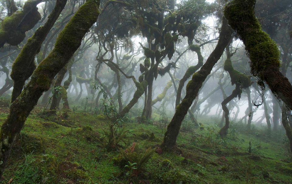 Äthiopien: Nachhaltige Entwicklung am Rand des Bale Mountains Nationalparks