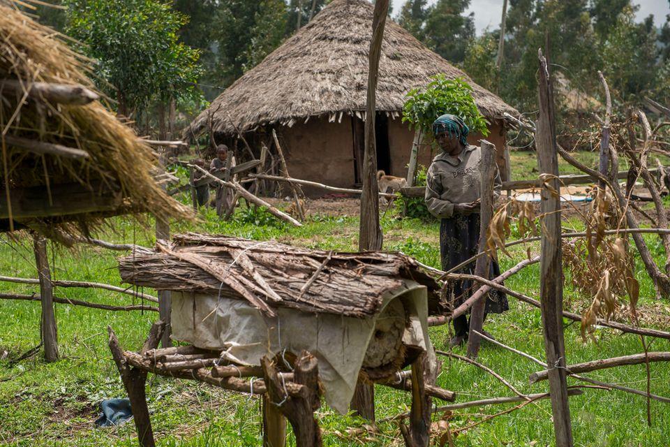 Äthiopien: Honigproduktion (im Vordergrund: ein traditioneller Bienenkorb) ist für die Kleinbauern in der Bale Region eine der wenigen Optionen, um ein Einkommen zu erwirtschaften
