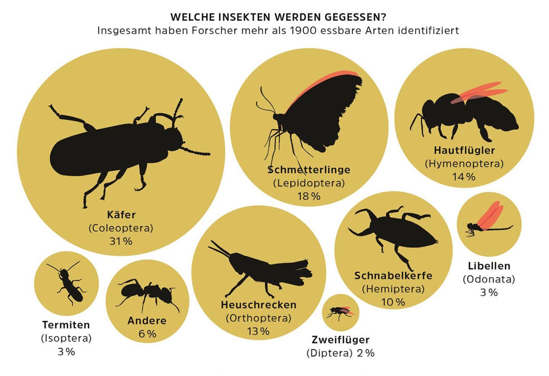 Diagramm Insekten