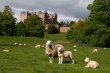 Drumlanrig Castle, Dumfries & Galloway,  Schottland