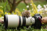 Igel mit Kamera