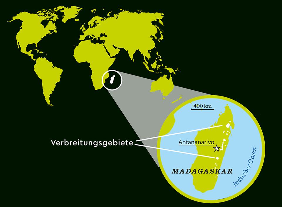 Verbreitungsgebiet der Schwarzweißen Varis