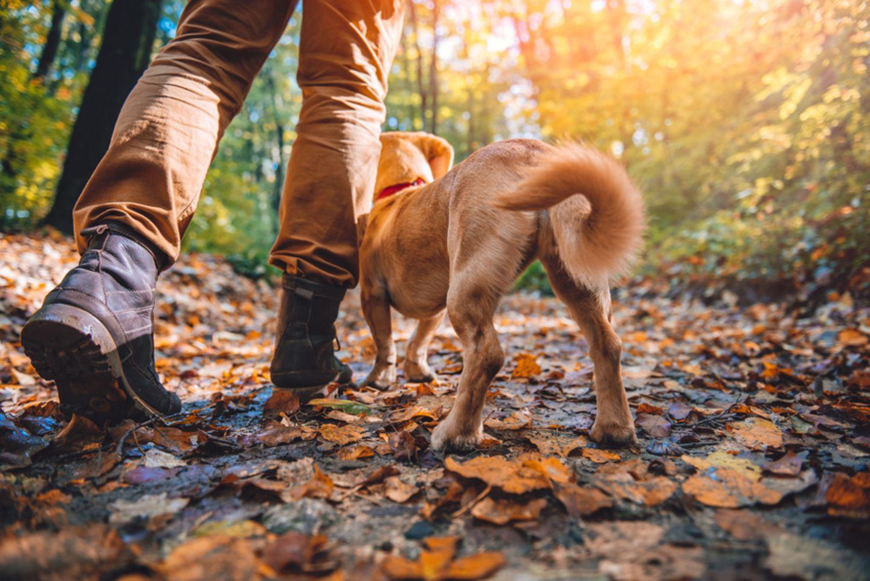 Wandern mit Hund in Belgien