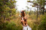 Hunde in Schweden