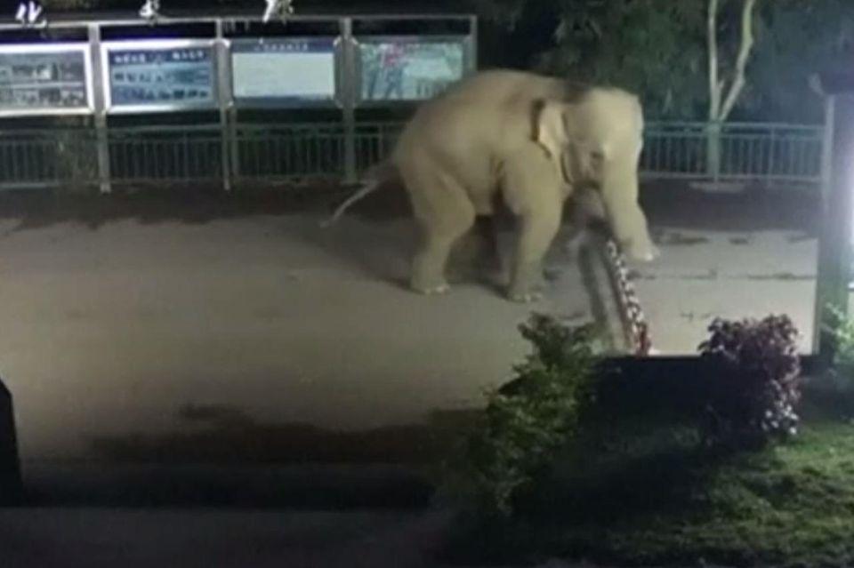 Elefant überquert Grenze