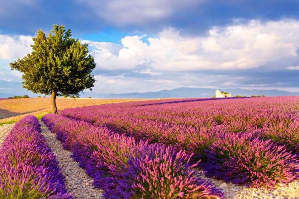 Südfrankreich: Avignon - eine bezaubernde Städtereise am Ufer der Rhône