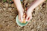 Eierschalen als Dünger
