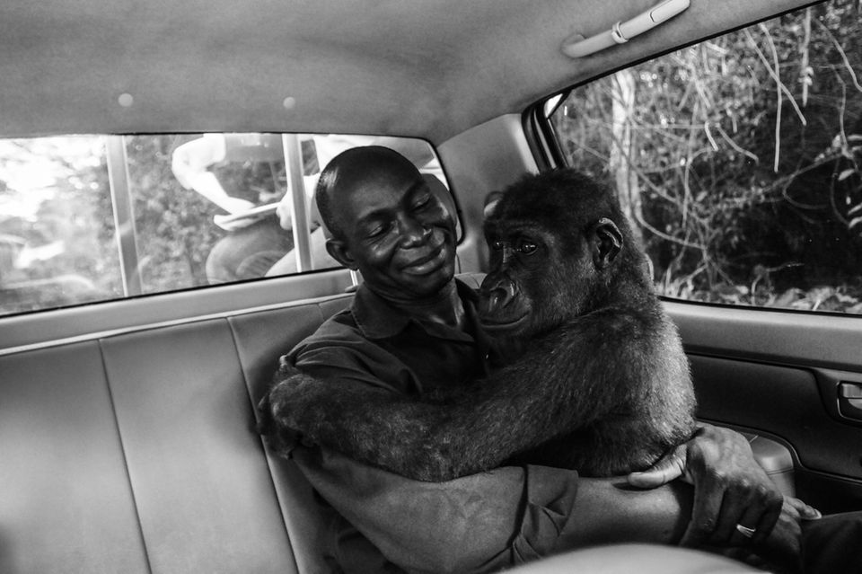 Jo-Anne McArthur/Wildlife Photographer of the Year