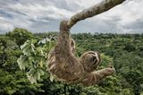 Luciano Candisani/Wildlife Photographer of the Year