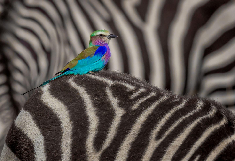 Lakshitha Karunarathna/Wildlife Photographer of the Year