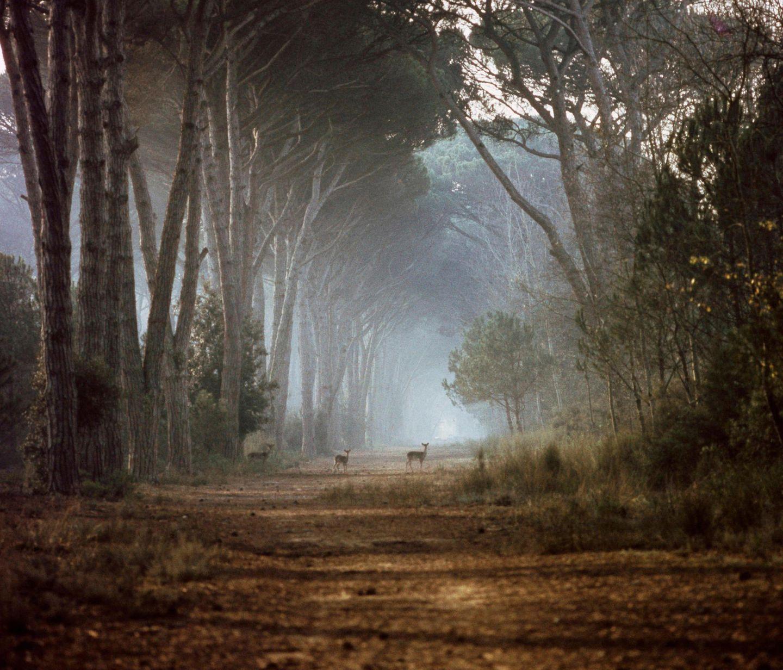 Naturpark San Rossore Migliarino Massaciuccoli