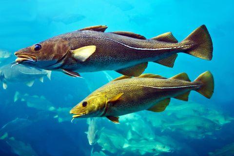 Fotogalerie: Nachhaltiger Fischfang