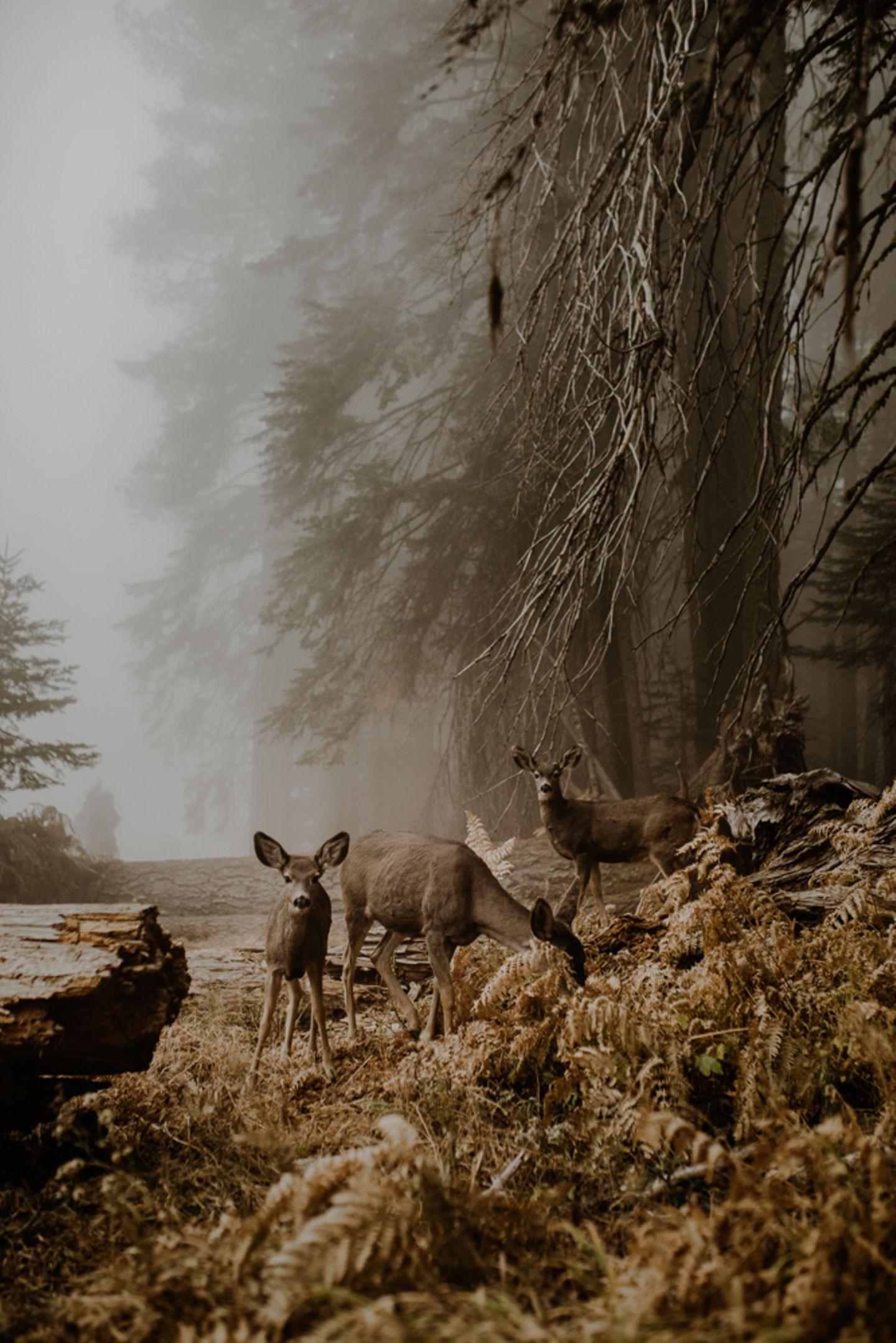 Justyna Zdunczyk, Poland, Winner, Open Wildlife and Winner, Poland National Award, 2018 Sony World Photography Awards