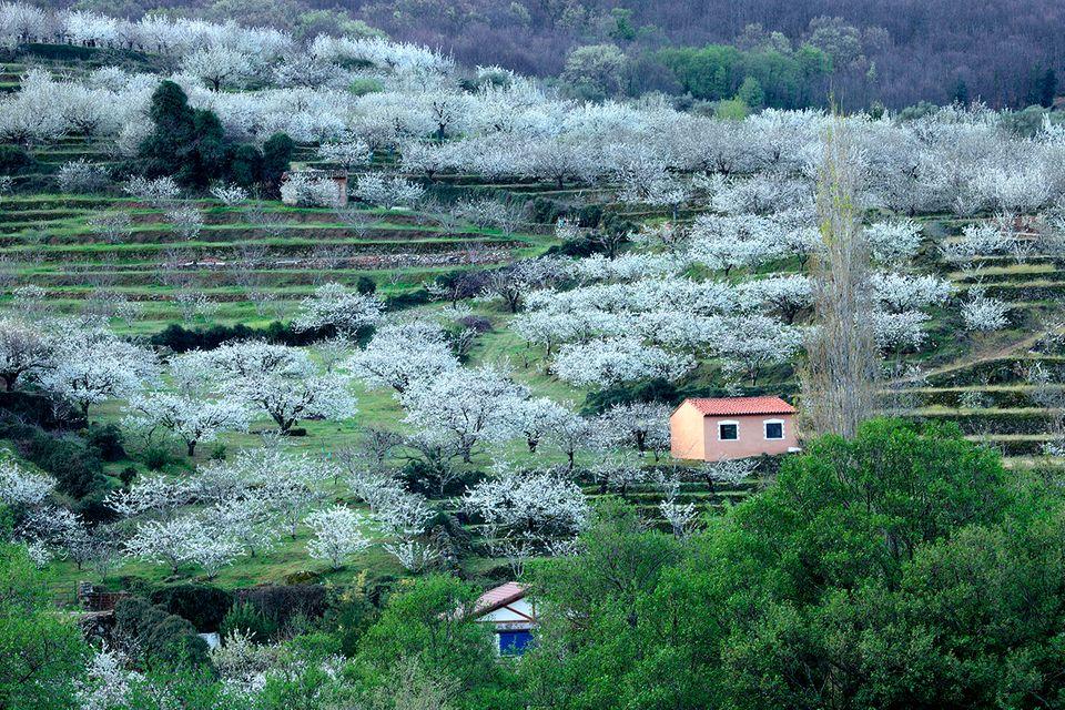 Spanien, Extremadura, Valle del Jert