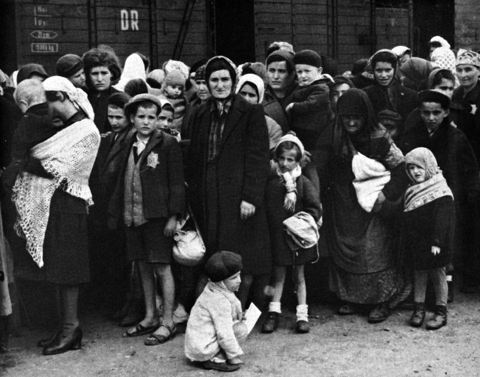 Auschwitz, Neuankömmlinge