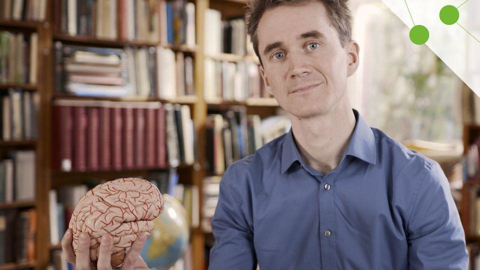 Gehirnjogging: Was Denksport kann und was nicht