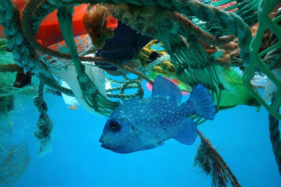 Foto: mauritius images / Photoshot Creative / Paulo de Oliveira, Plastikmüll, Meer