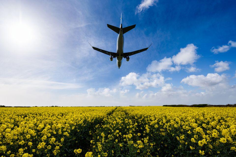 Landendes Flugzeug über Rapsfeld