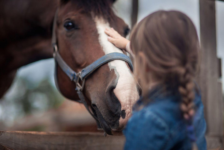 Mädchen streichelt Pferd