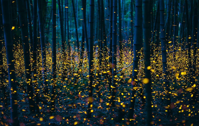 Glühwürmchen