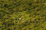 Elefant im Addo National Park, Südafrika
