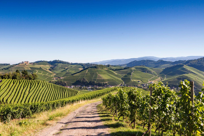 Ortenauer Weinpfad