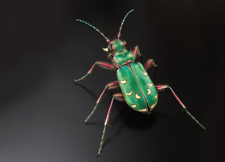 Insekten-Modell
